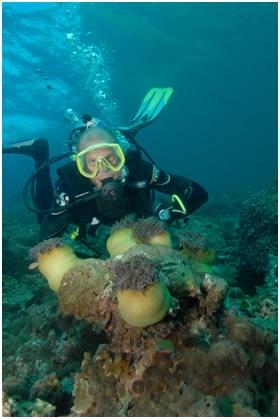 anemonediver