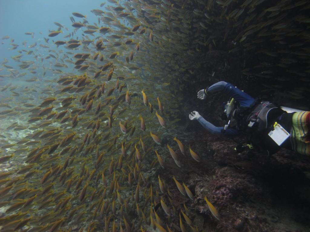 Divemaster Yellow Snapper koh Lipe Thailand