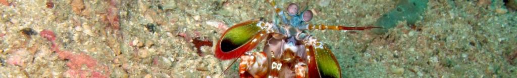 Galleries of dive photos Koh Lipe Thailand
