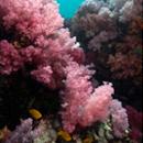 Talang Diving Koh Lipe Thailand