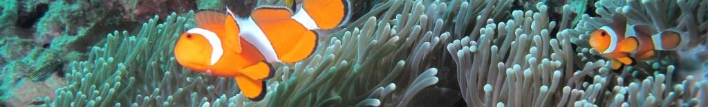 Dive sites Diving Koh Lipe
