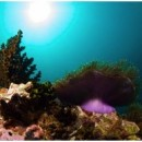 Koh Taru Dive Sites Koh Lipe Thailand