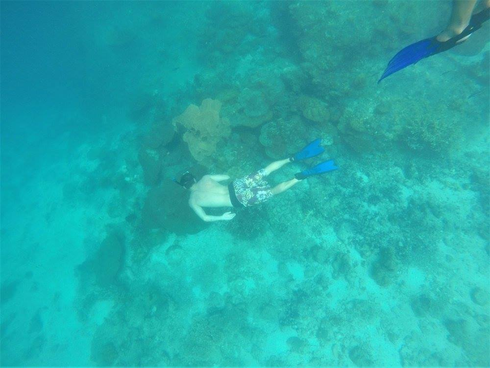 Snorkeling Tour Free dive coral