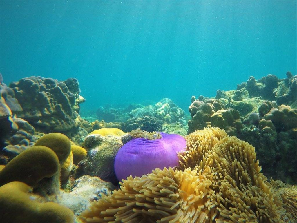 Snorkeling Tour Purple Anemone