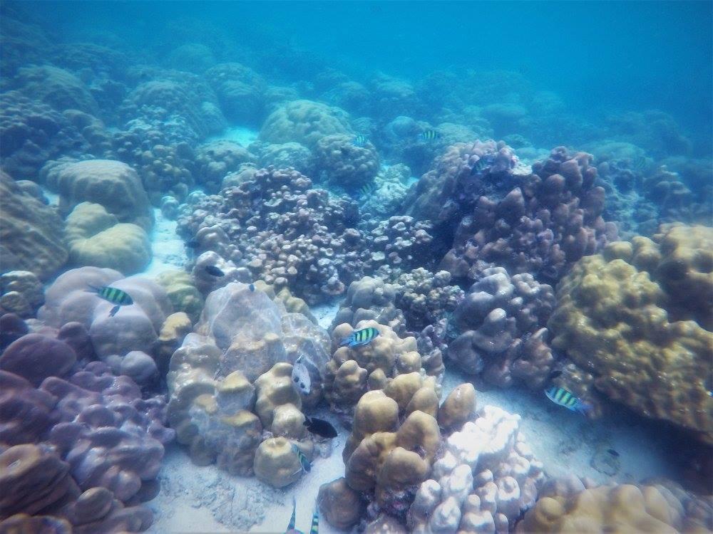 Snorkeling Tour hard coral