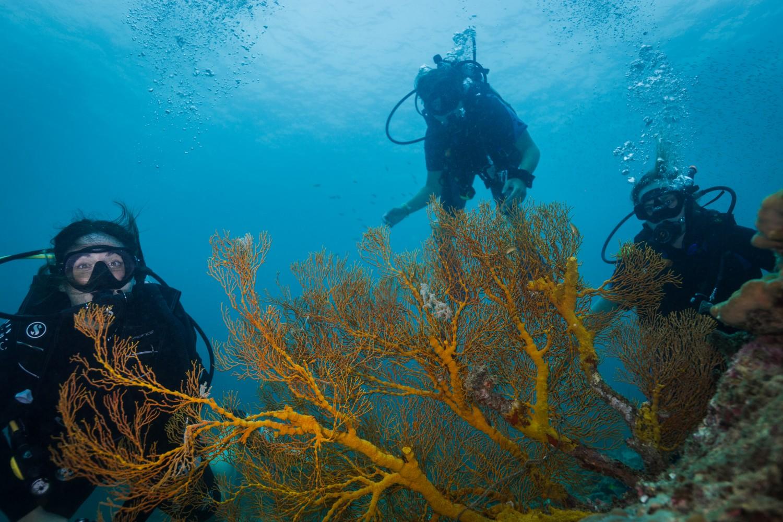 Fan Coral Divers Koh Lipe Thailand