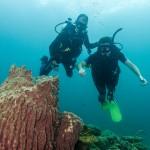 Barrel Sponge Coral Divers Koh Lipe Thailand