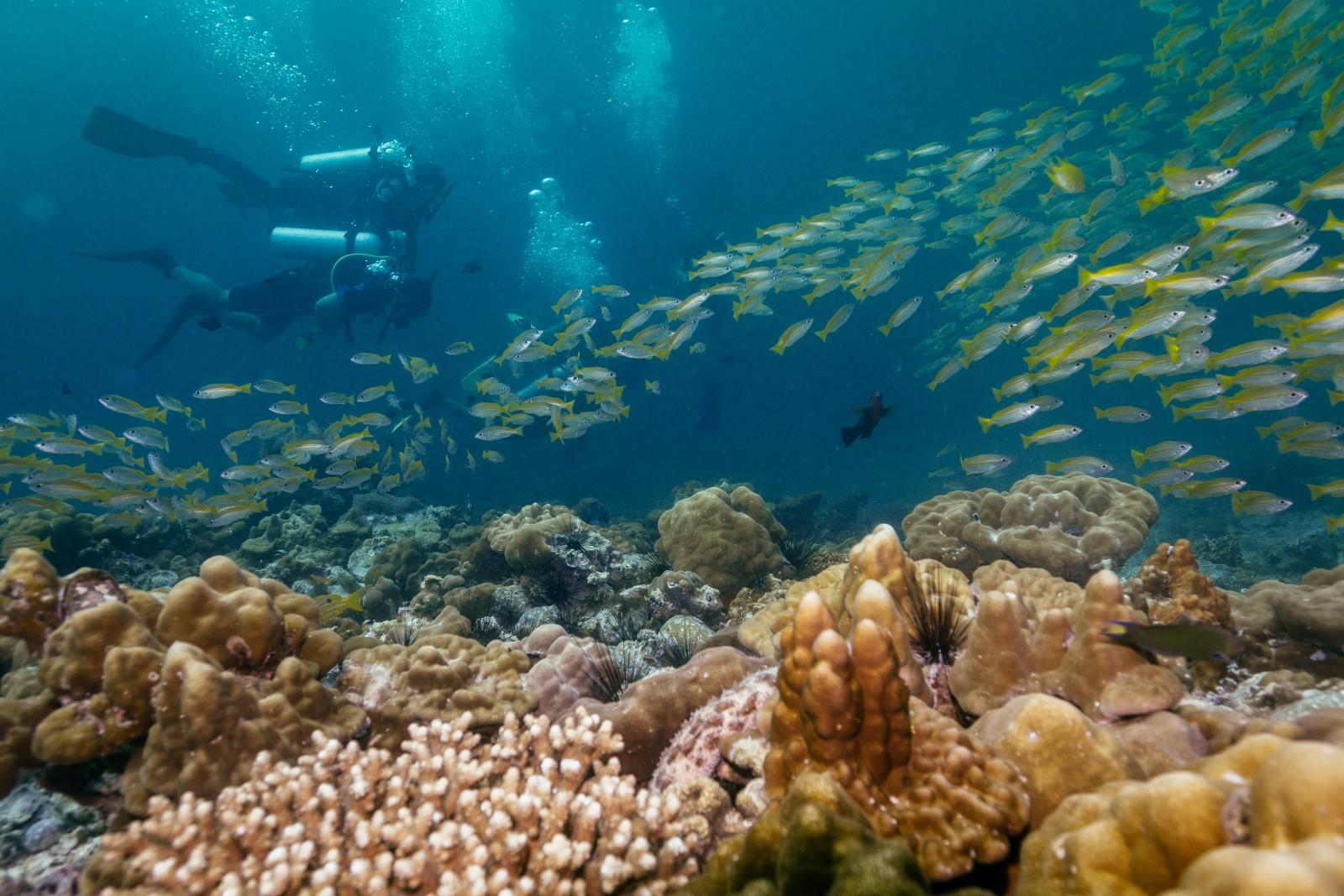 Fish, Coral Divers Taru Dive Site Koh Lipe