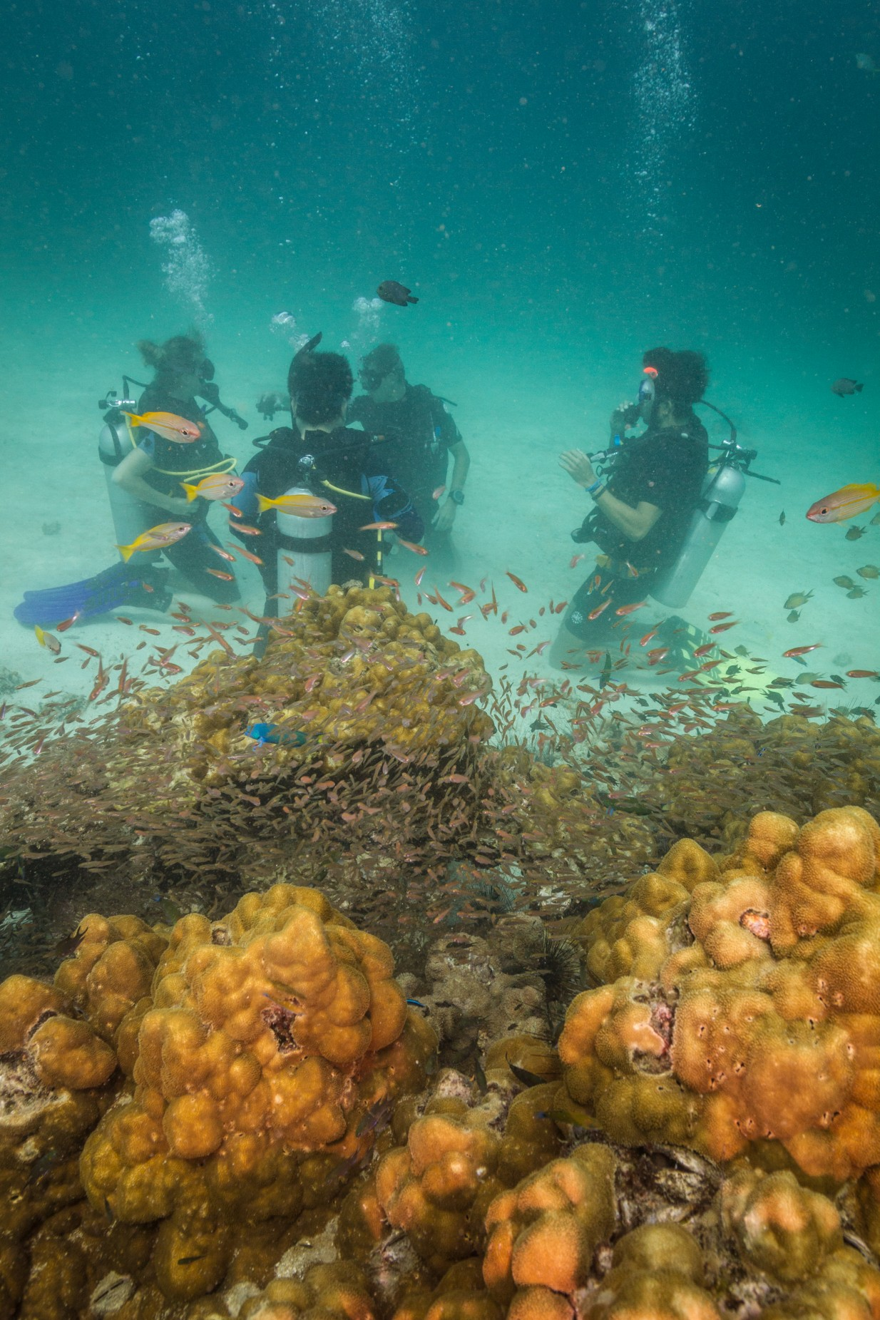 Coral Glass Fish Dive Skills Ko Lipe Thailand