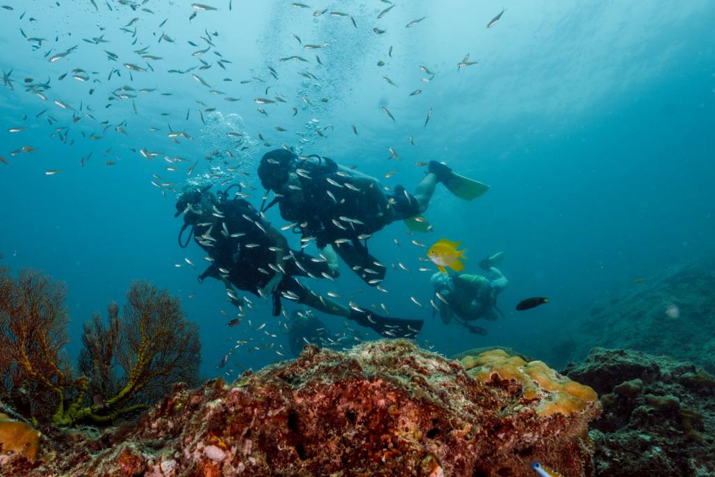 Diving Around Coral Ko Lipe Thailand