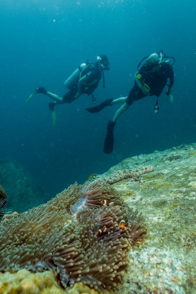 Guiding divers Clown Fish in Koh Lipe, Thailand