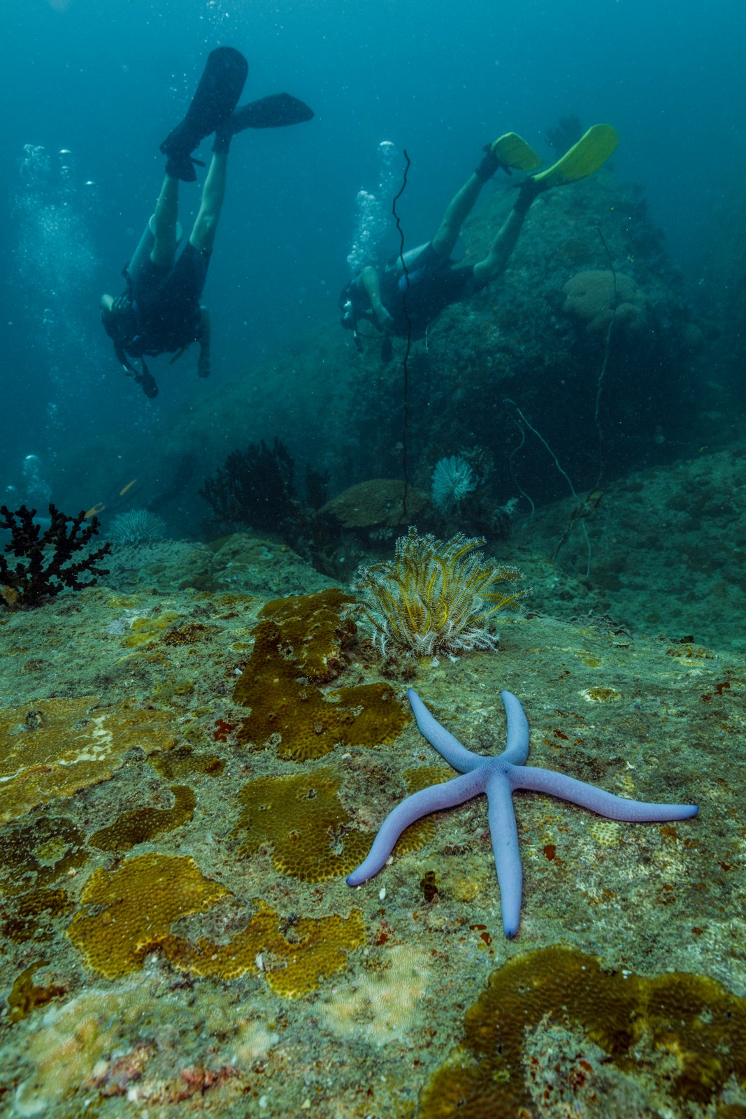 Starfish diving over Coral Reefs of Koh Lipe, Thailand