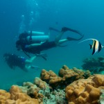Diving with Coral Morish Idol Fish Koh Lipe Thailand