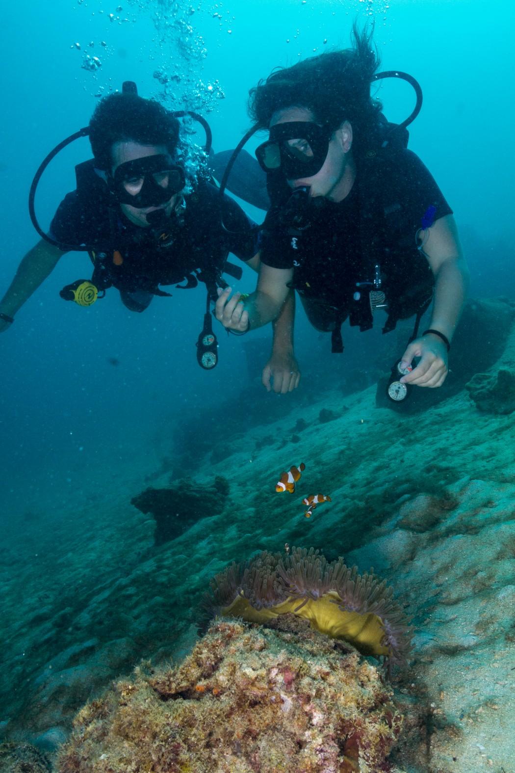 Divers and Nemo Koh Lipe Thailand