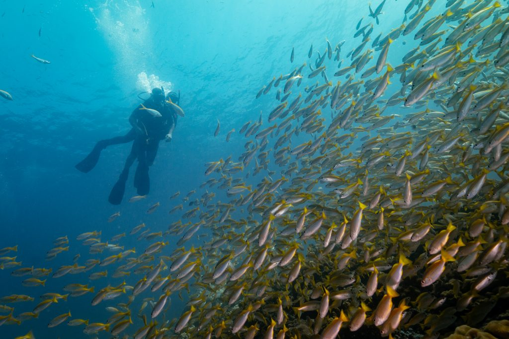Discover SCUBA Diving over Yellow snappers