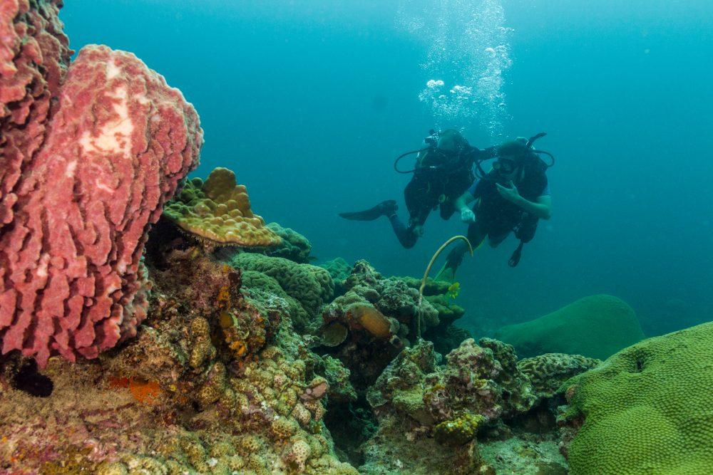 Discover SCUBA Diving over coral Ko Lipe