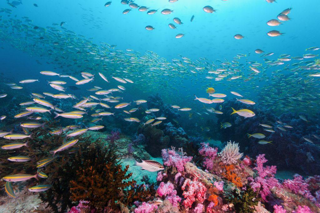 Thai diving พิเศษ ลดทันที 10% สำหรับทุกคอส และ Fun Dive ตั้งแต่  15 พฤกษภาคม -15 กันยายน ของทุกปี   ยิ่งกว่านั้น ที่พักฟรี สำหรับนักเรียน และนักดำน้ำทุกท่าน