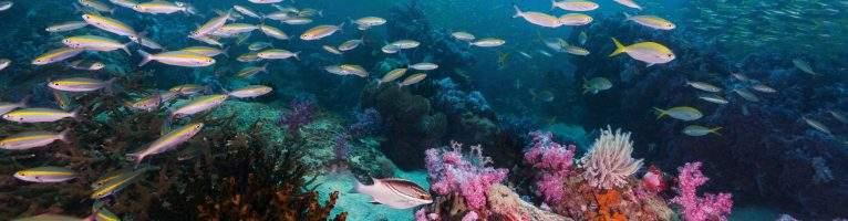 Beginner Diving Courses Koh Lipe