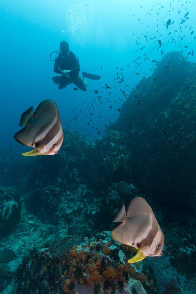 Batfish diver stonehenge koh lipe