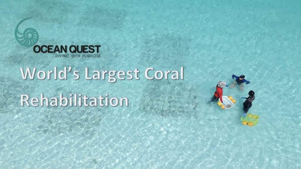 ocean quest coral conservation