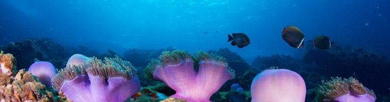 Continue your Diving, Advanced SCUBA Training